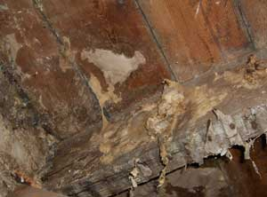 Dry rot on a large joist